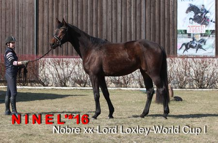 НИНЭЛЬ*16 (Nobre xx-Lord Loxley-World Cup l)
