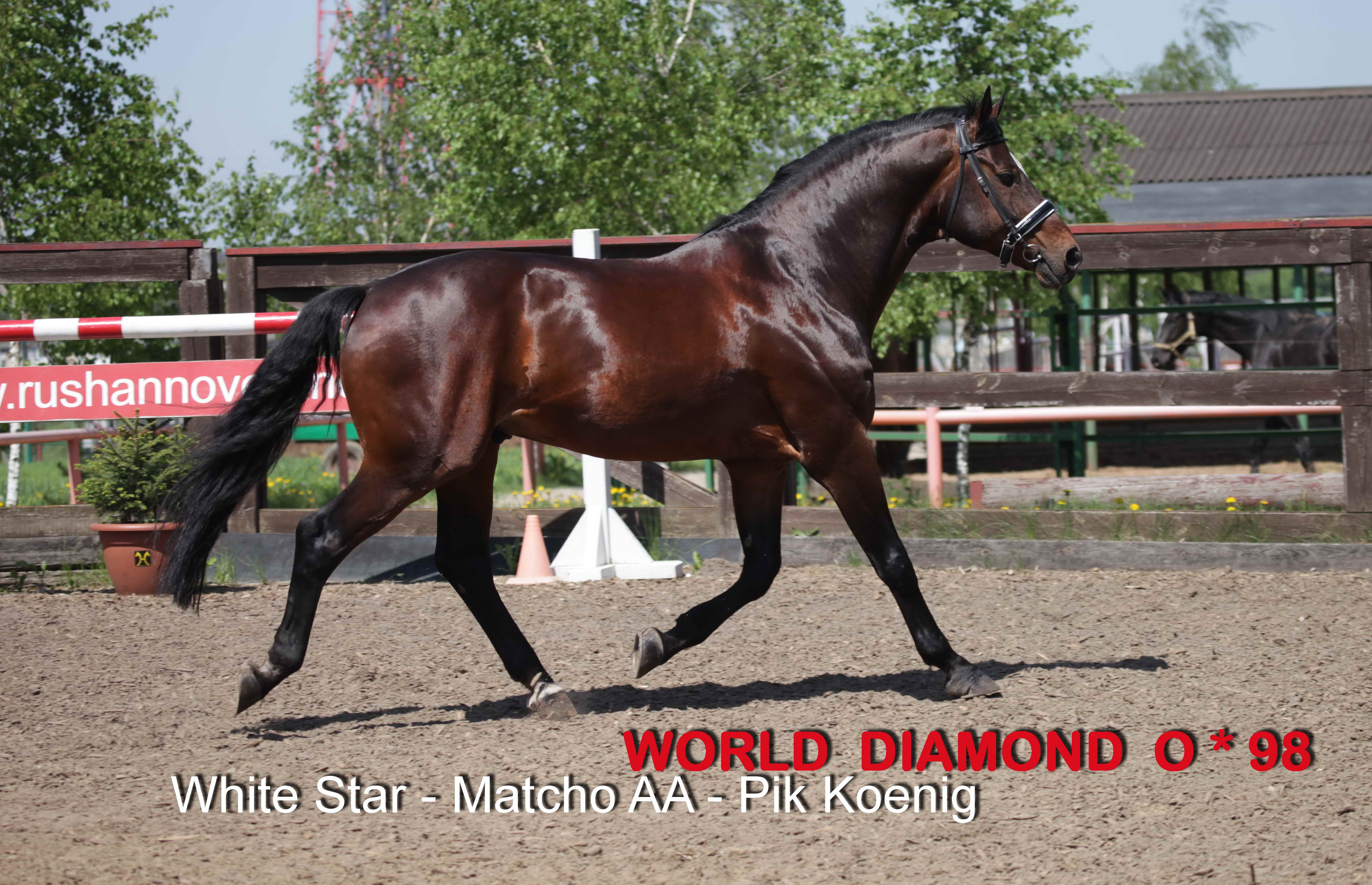 WORLD DIAMOND O - 1998 (White Star/ Matcho AA /Pik Koenig)