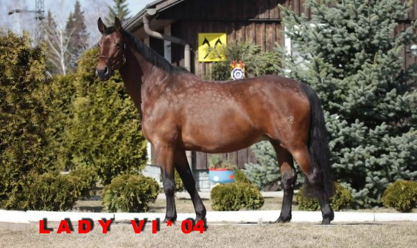 Lady Vi (Lord Loxley/World Cup I/Domburg)