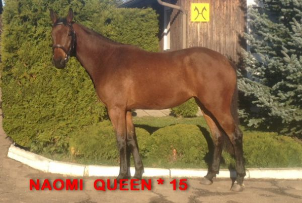 NAOMI QUEEN ( Nobre xx / Quality / Graphit )